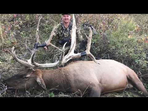 Archery Elk Hunt. My journey to harvesting a 355 inch Monster. Whale Tails for Dayz