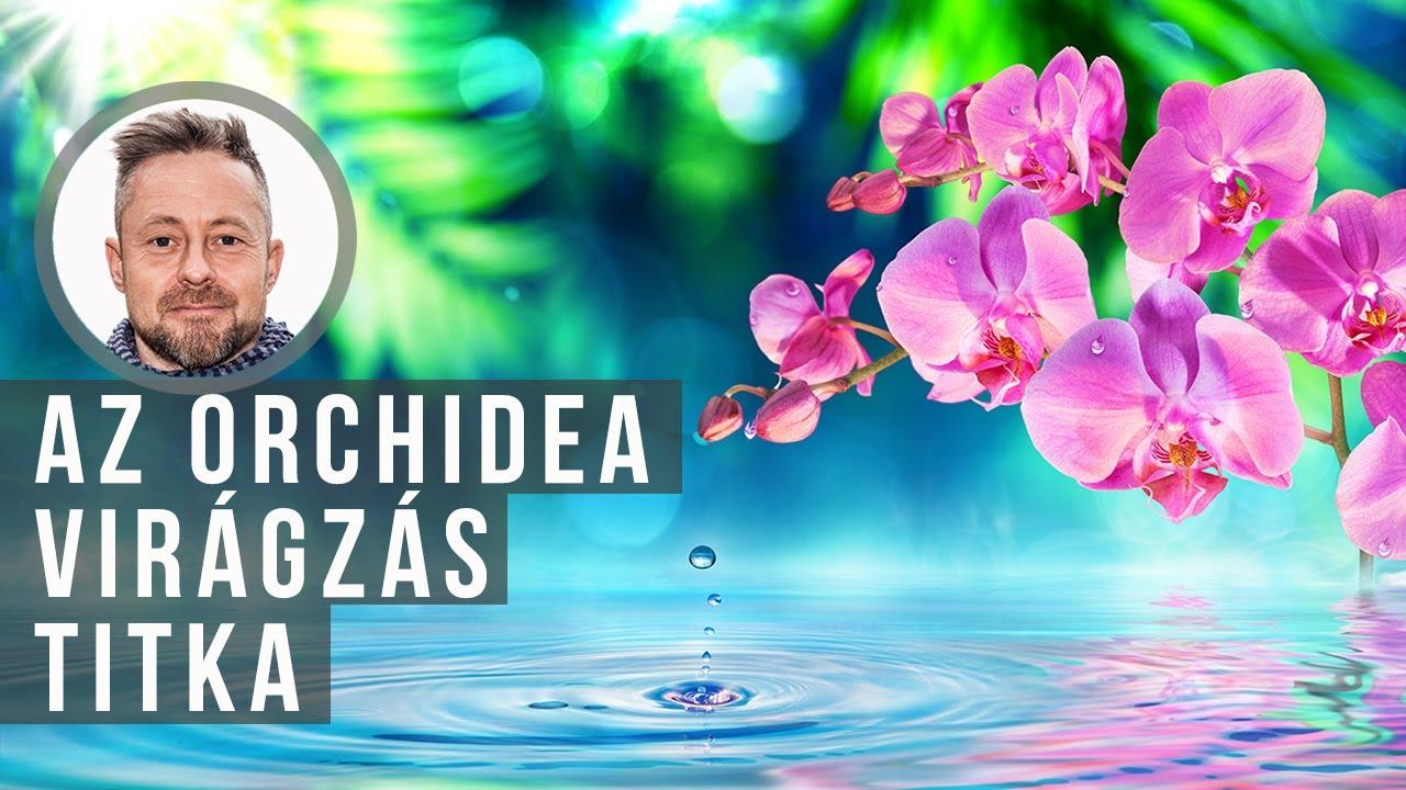 Download Ezért nem virágzik az orchideád   kert TV