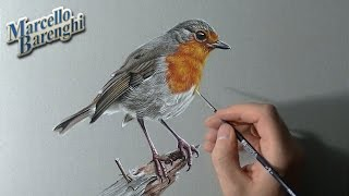 Drawing Time Lapse: robin bird