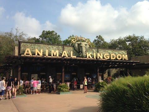 Animal Kingdom Entrance Walk Through Pov Walt Disney