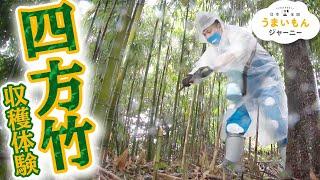 「四方竹の収穫体験」うまいもんファイル 高知編