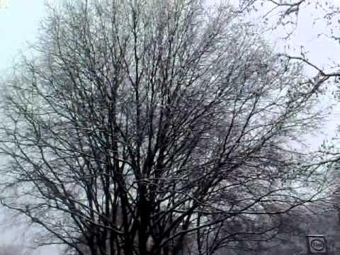 titti neve reggio emilia
