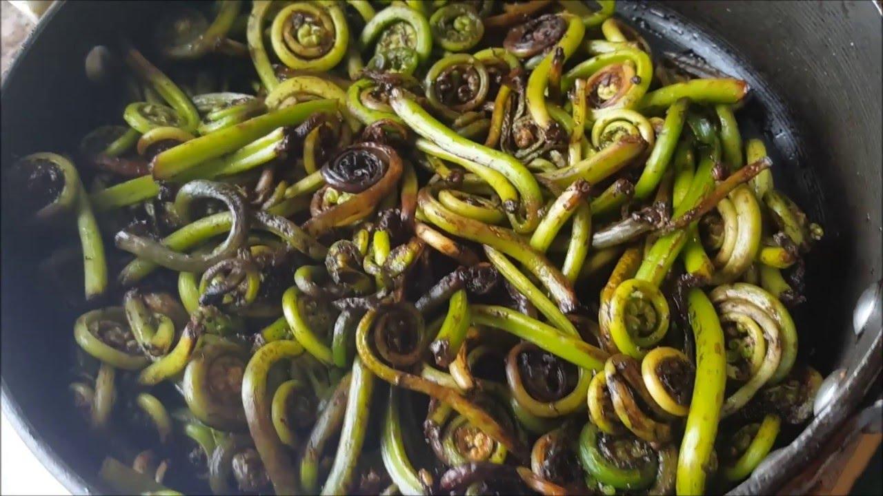 кулинария как приготовить салат из папоротника