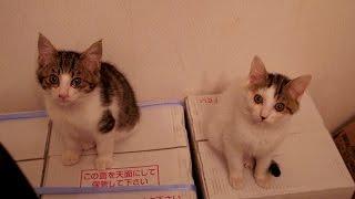 2015.12.4保護猫 抱っこして欲しい時の訴え方