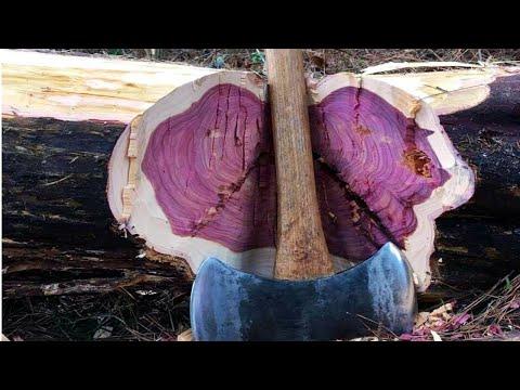 kayu-termahal-di-dunia-1-kilogram-25-juta-rupiah