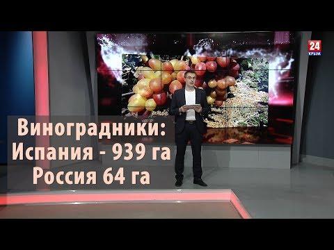 Виноградники России: мороз