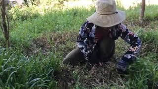 Chia sẽ mọi người mẹo cắt cỏ nhanh mà an toàn - Hoài Vlogs