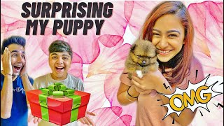 SURPRISING MY CUTE PUPPY WITH GIFTS | Rimorav Vlogs