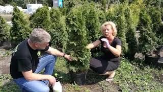 RE:GREENER kopā ar Dārzs zem Saules Antru māca stādīt tūju!