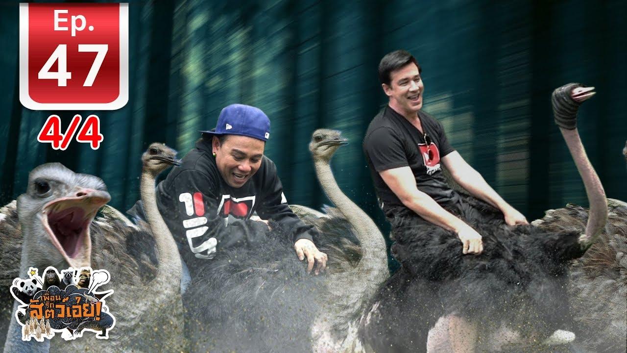 สุดฮา!!! ฟาร์มนกกระจอกเทศที่ใหญ่ที่สุดในเมืองไทย - เพื่อนรักสัตว์เอ้ย EP 47 (4/4)