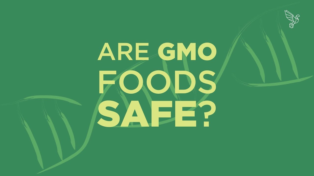What is GMO and are GMO Foods Safe?
