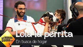 Lola, una perrita cariñosa y encontrada en muy malas condiciones - El Hormiguero 3.0