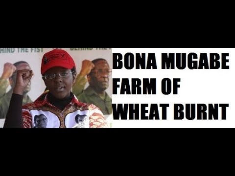 Bona Mugabe's Farm Burnt-zimnewstoday