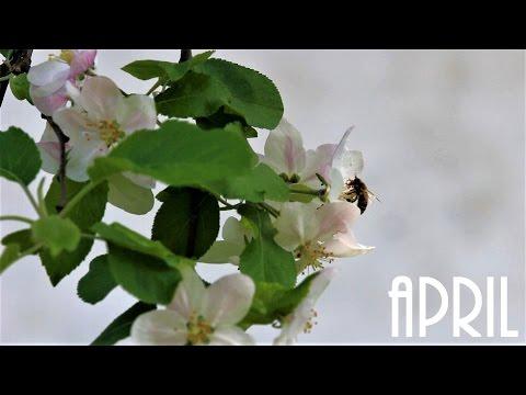April 2017  Blossom