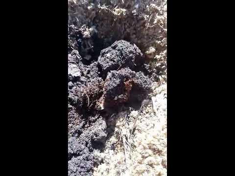 каталог Vaccinium Голубика, Брусника, Клюква