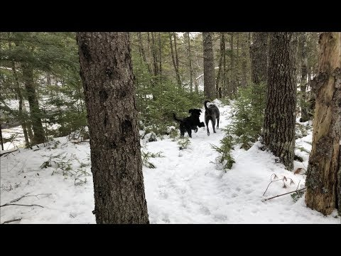 Amazing Wintery Woods Trail (Dog Walking by the River)   4K