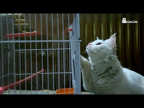 ❤ Cat Showing Keen Interest in Birds ❤