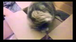 Stoned Fuzzy Cat