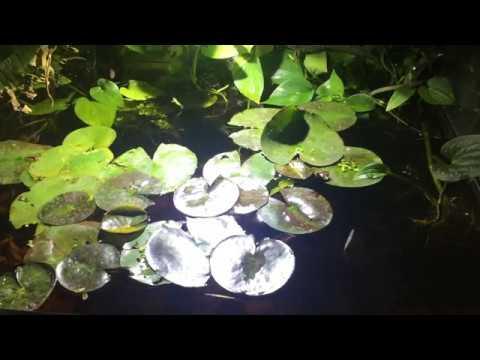 Asian Blackwater Biotope