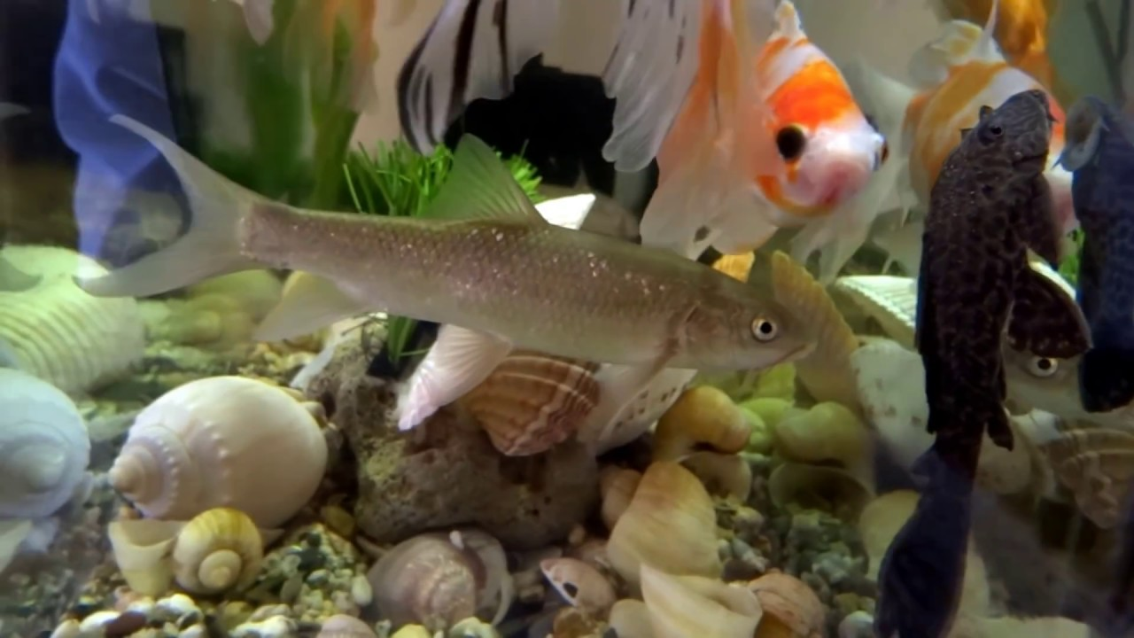 Fish Tank 3d Live Wallpaper For Pc Beautiful Collection Fish Goldfish Freshwater Fish