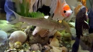 fish tank wallpaper hd for desktop full screen flower download 8 1 wallpaper hd for desktop ful