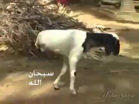 Mucize !!! Allah Teala ( C.C. ) yürü desin yeter