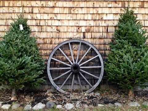 A Choose-and-Cut Christmas Tree Farm