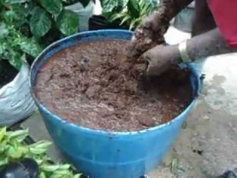 Plant Doctor Trinidad Coco Peat.AVI