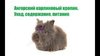 Ангорский Карликовый Кролик & Содержание Ангорского Карликового Кролика. Ветклиника Био-Вет