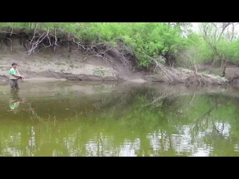 FishTales: Up The Creek  To The Pool