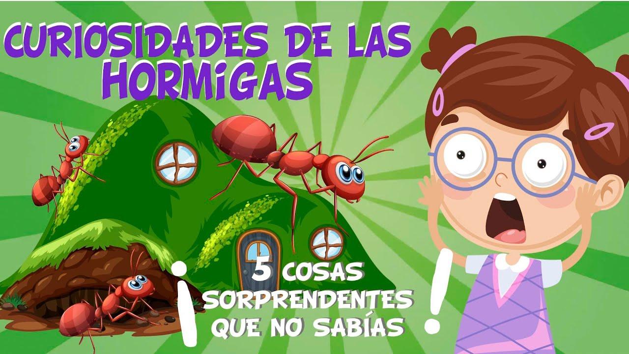 Las Hormigas Cinco Cosas Que No Sabías Didactalia