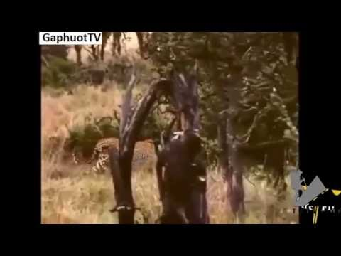Aboriginal African battled newspaper Bait To Pirates