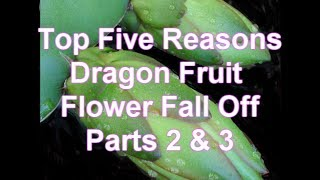 Parts 2 & 3 Top Five Reasons Dragon Fruit Flowers fall Off and Turn Yellow 101 series