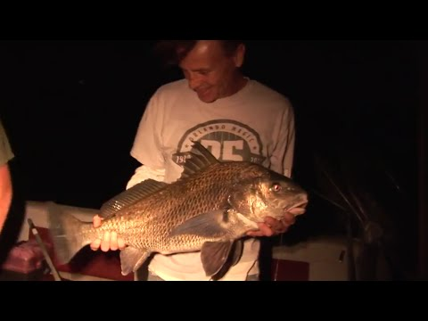 Night Fishing For Giant Black Drum In Haulover Canal, Florida