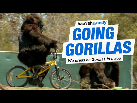 Two friends/comedians put on gorilla suits and enter an empty zoo enclosure, and keep making it more ridiculous until people get suspicious