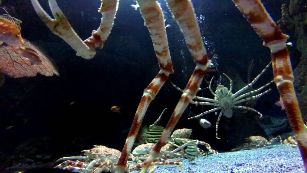 Carne de cangrejo con trozos gigantes