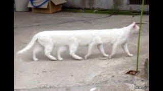 Приколы коты и кошки, забавные животные, смех до слез . подборка #2