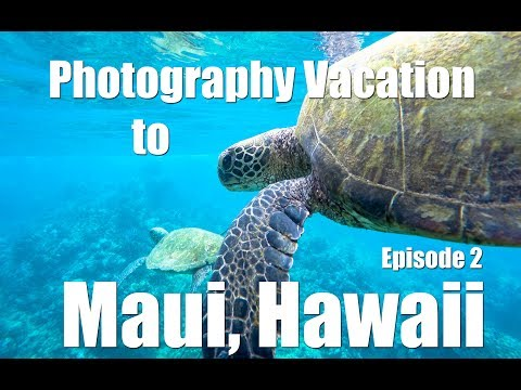 Photography Vacation to Maui - Episode 2 - Photo Lowdown