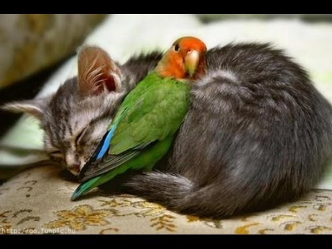 15 Amazing Animal Friendships You Won't Believe!