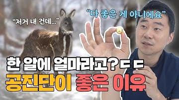 서울대생이 챙겨 먹는 공진단! 그 효능과 가격 대공개!