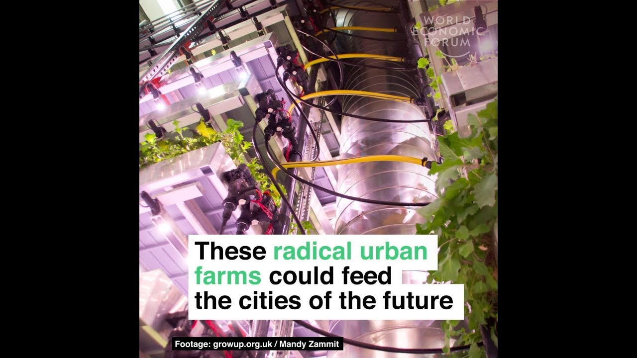 These radical urban farms could feed the cities of the future