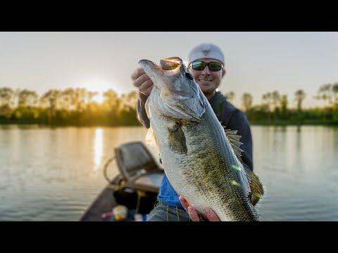 live-bait-fishing---big-live-bait-for-huge-bass!