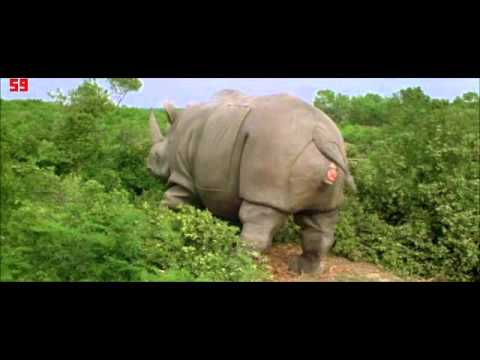 mother rhino is giving birth ace ventura youtube