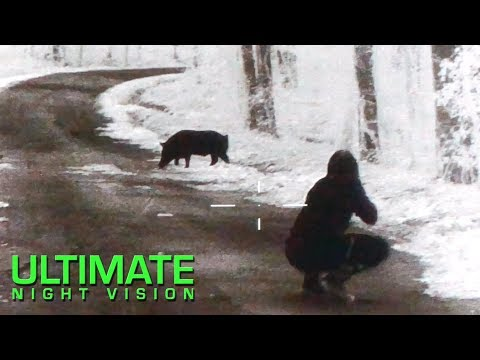 60 Hogs and 7 Coyotes Down | Thermal Hunting with the Flir PTS 536