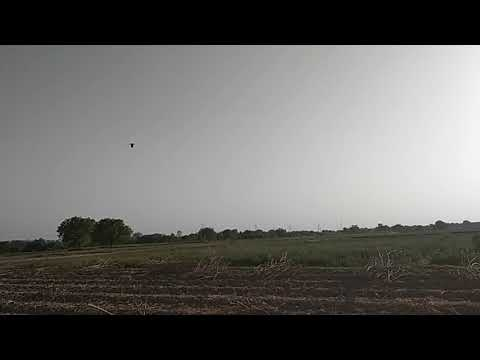 Titodi bird sound