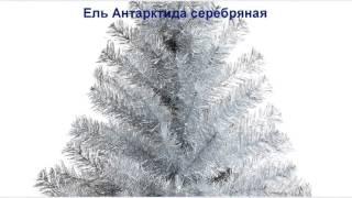 Искусственные елки оптом и в розницу - Создай свой бизнес! Доставка по всей России!(, 2015-10-18T18:12:01.000Z)