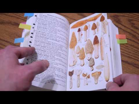 A Book Review Of The Peterson Field Guide To Mushrooms