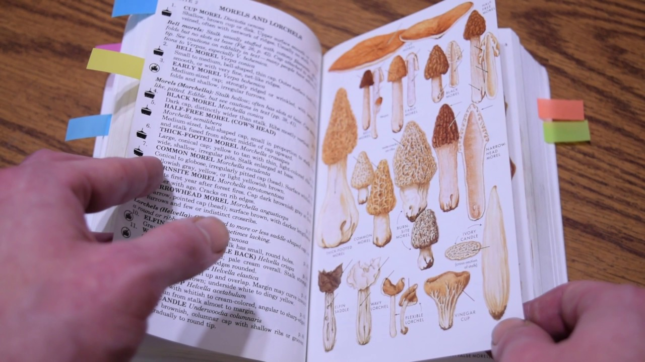 Reviews of books on identifying fungi.