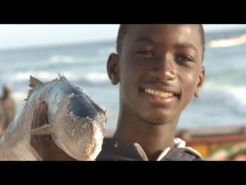 Mauritania's Rich Fishery Resources Drives Local Economy