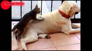 Смешная собака не только рассмешит, а еще и спать уложит!